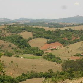 ブラジル産プロポリスの特徴