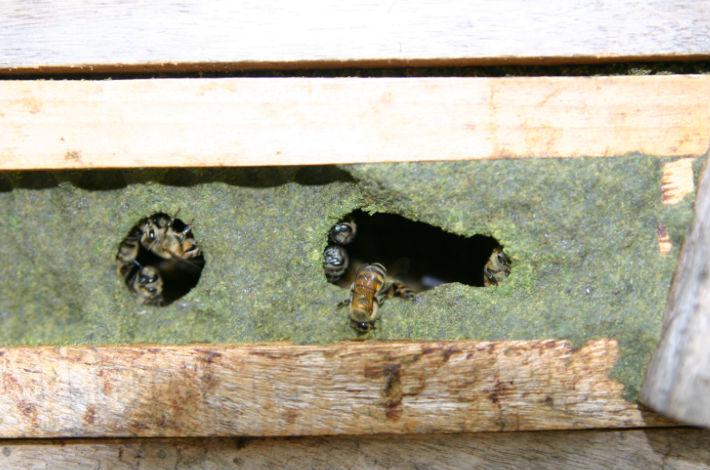 巣箱隙間プロポリス