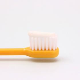 歯磨き粉にプロポリスが配合されている理由