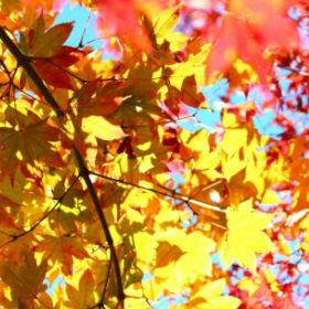 夏が終わったら「秋バテ」に注意