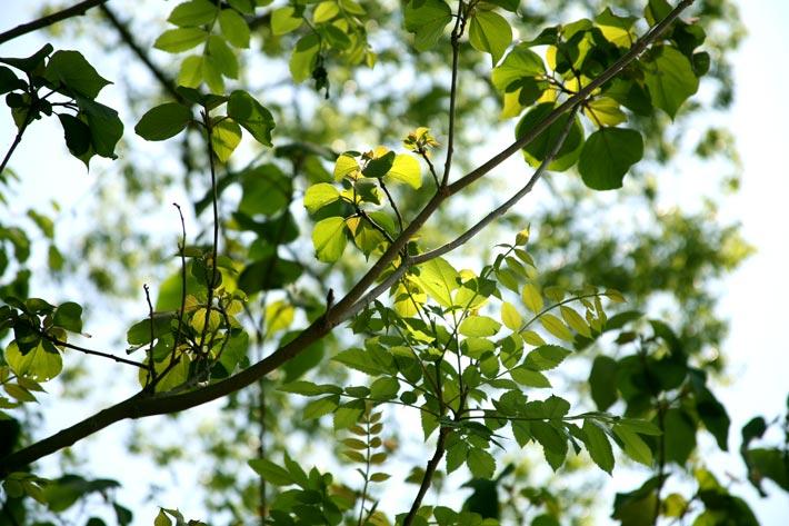 プロポリスは植物が作りだす「天然の抗生物質」