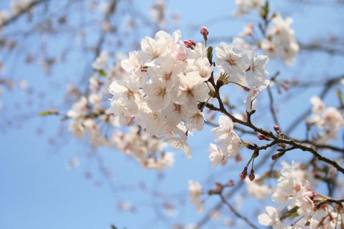 春に「冷え」を感じやすい理由